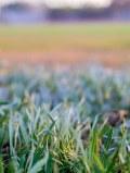 Grass on a baseball field...