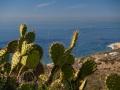 Cacti & the beach