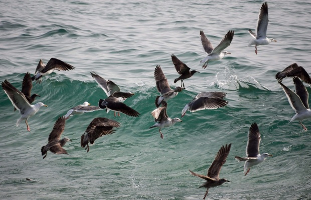 seaagggullsss