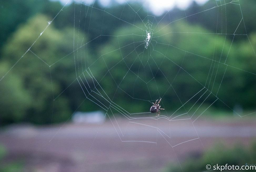 Spider Web Under Construction
